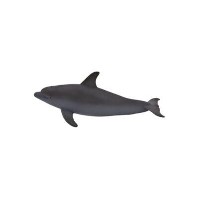 دلفین پوزه کوتاه