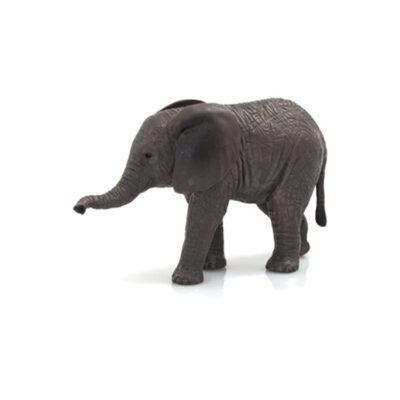 بچه فیل آفریقایی موجو (mojo)