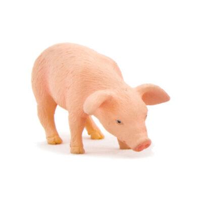 بچه خوک در حال غذا خوردن