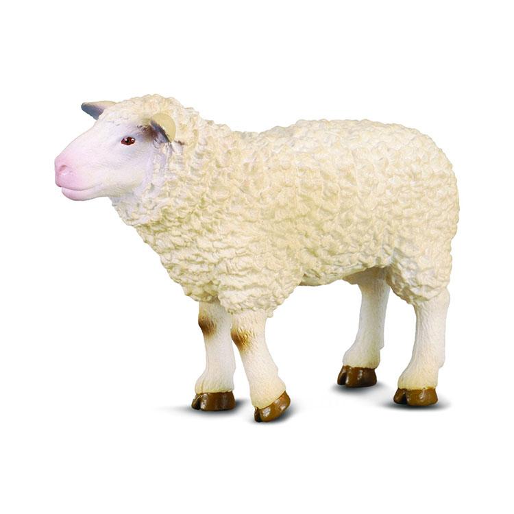 گوسفند کالکتا