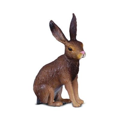 خرگوش صحرایی کالکتا