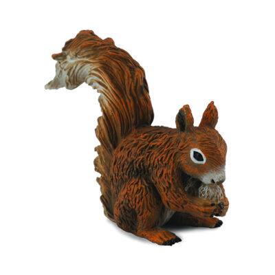 سنجاب قرمز کالکتا - در حال خوردن