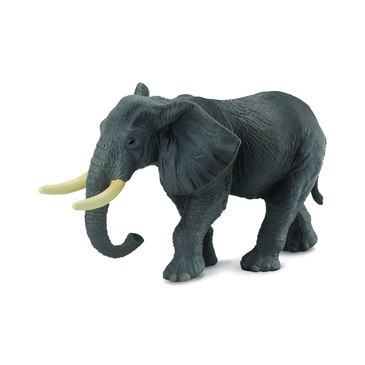 فیل آفریقایی کالکتا